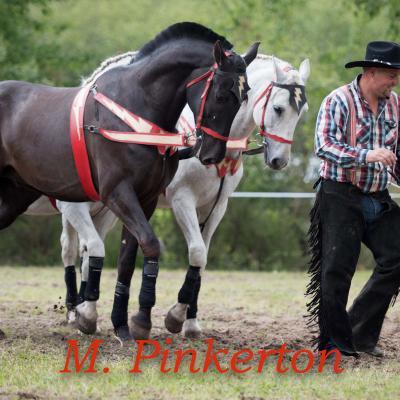 La Cie Willow horse show