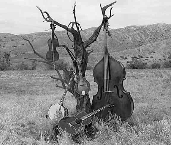 bluegrass-1.jpg